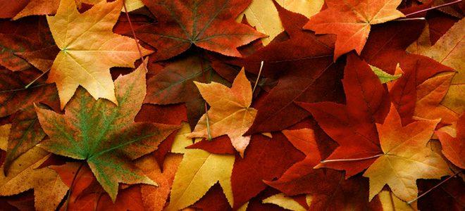 Fall Rhapsody